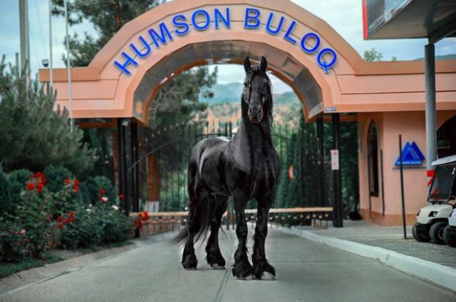 HUMSON-BULOQ